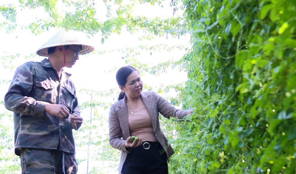 Chị Huệ đi thăm vườn cây khổ qua rừng trồng liên kết theo mô hình Vietgap ở nhà dân